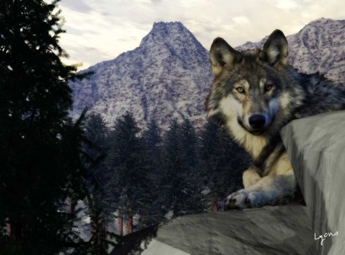 Wolflook by Graphic Artist James Lyrons