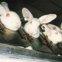 Buy Cruelty-Free Products