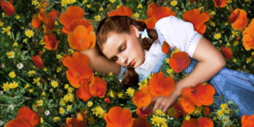 The Wizard Of Oz, Dorothy sleeping amid the poppies; get the people drunk and make them sleepy